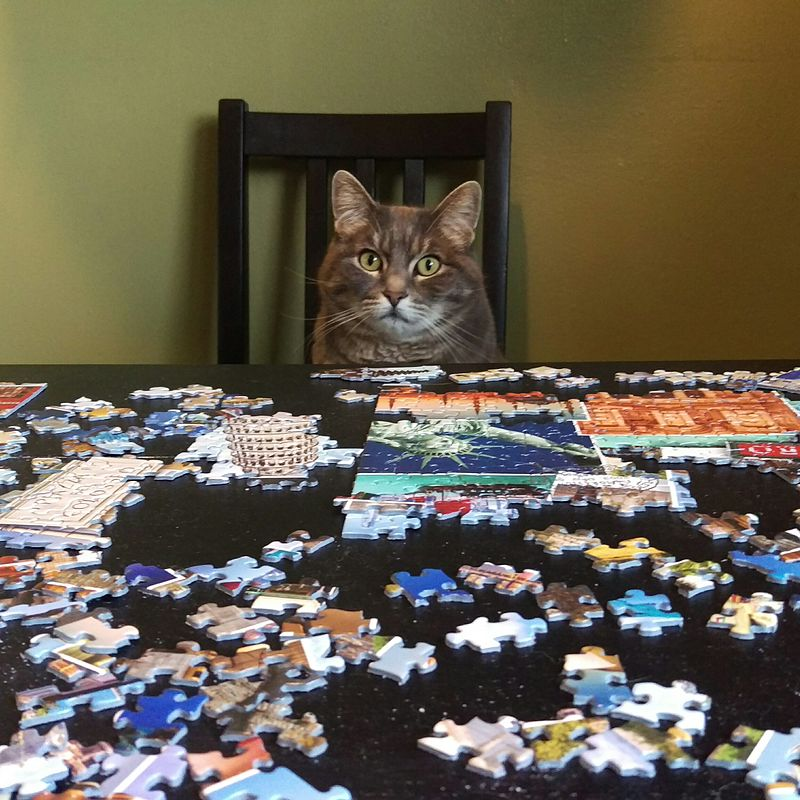 PuzzleCat.jpg